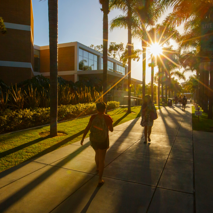 A silhouetted image of students along palm walk during the sunset.