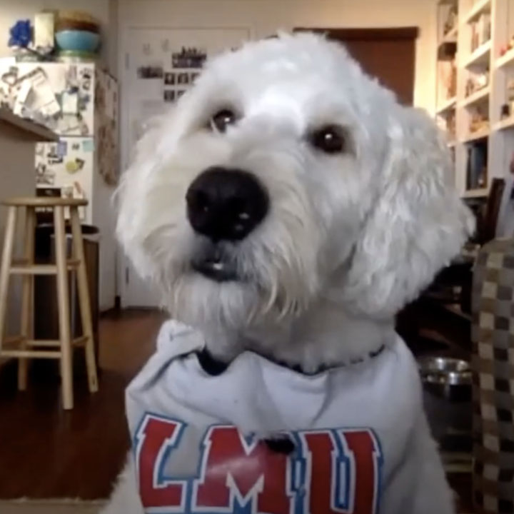 Buster, the campus dog with a white LMU handkerchief on